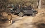 SS Lion Sands lion (3)
