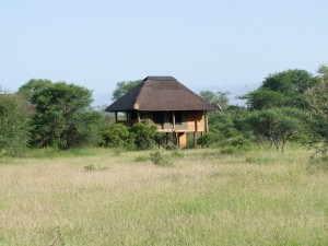 One of five stilted chalets at nThambo Tree Camp in the Klaserie, Kruger Park.