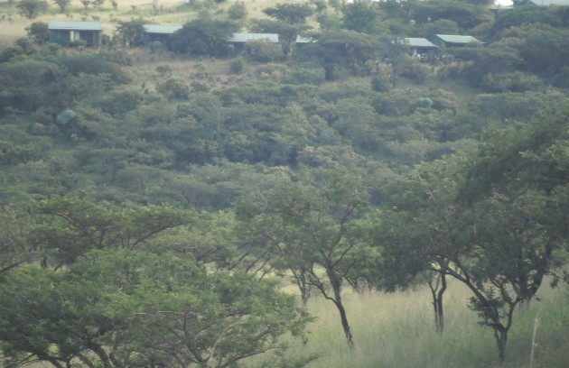 Chalets amid the acacias at Three Trees Lodge in the Spioenkop Game Reserve.