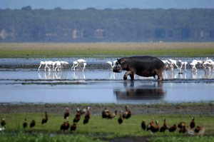 The iSimangaliso Wetland Park has eight interlinking ecosystems.