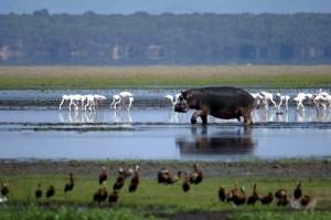 The iSimangaliso Wetland Park has eight interlinking ecosystems.