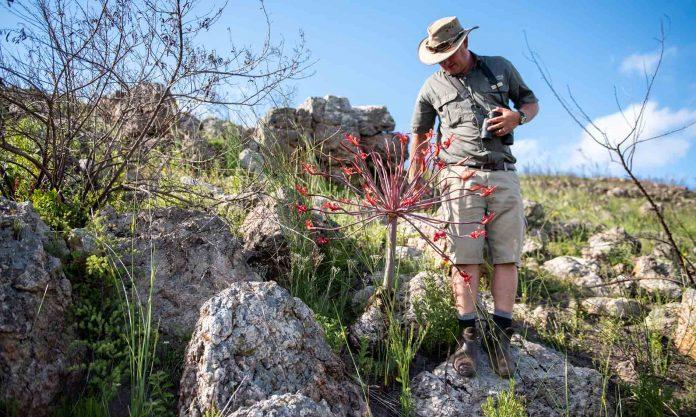 Gondwana - Fynbos Conservation Experience