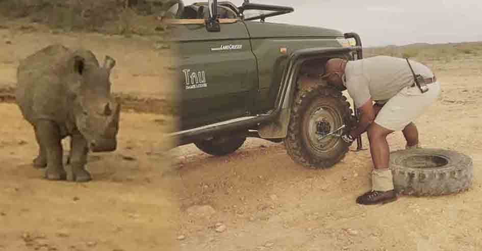 Ranger Ernie Maetla repairs the puncture as a lone rhino watches from a short distance away. Picture: Caroline Hurry